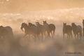 2017, Great Escape Mustang Sanctuary December 9