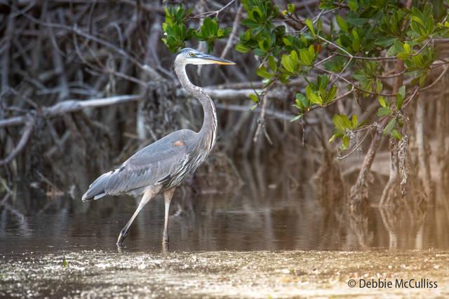 Florida Wildlife and Nature Fine Art