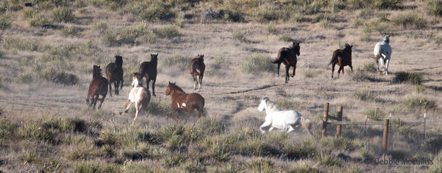 2017, Great Escape Mustang Sanctuary, December 9, winter