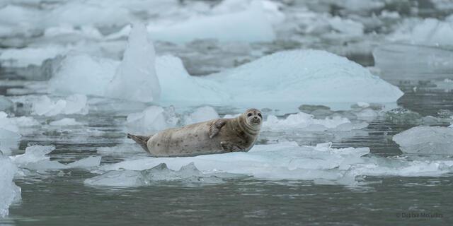 LaConte Bay Seal