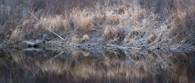 Carson Nature Center, South Platte River, nature