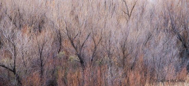 grass, New Mexico, winter