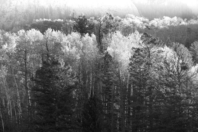 Colorado, fall, trees