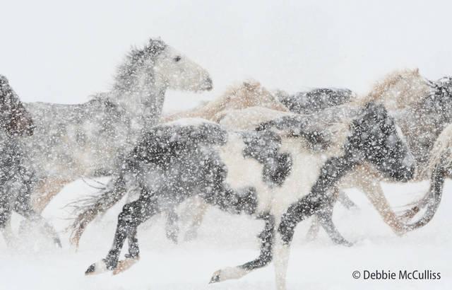 DDD Ranch, February 2018, Horses, Kalispell, Montana