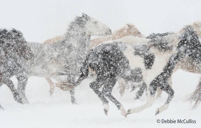 Triple DDD Ranch, February 2018, Horses, Kalispell, Montana Ranch