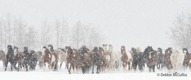 DDD Ranch, February 2018, Kalispell, Montaa, Montanad, Triple