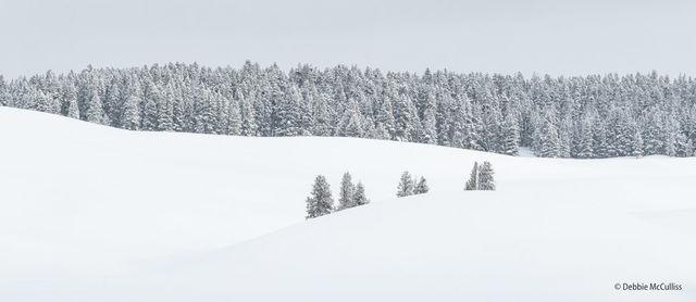Yellowstone, Winter, Landscape