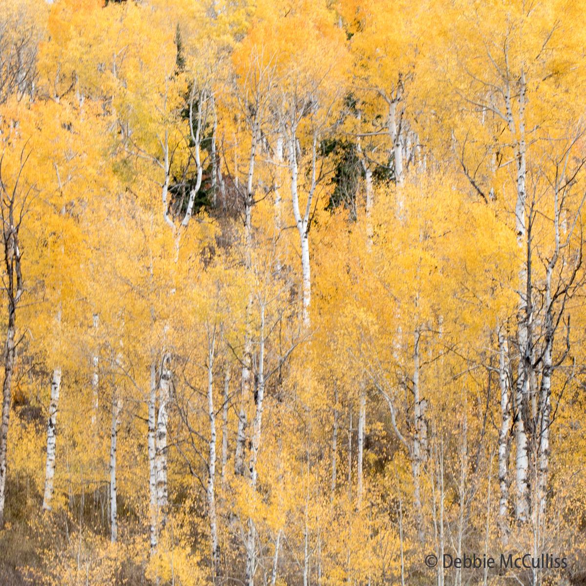 Woodchuck Mountain Ranch, Stagecoach, Colorado, photo