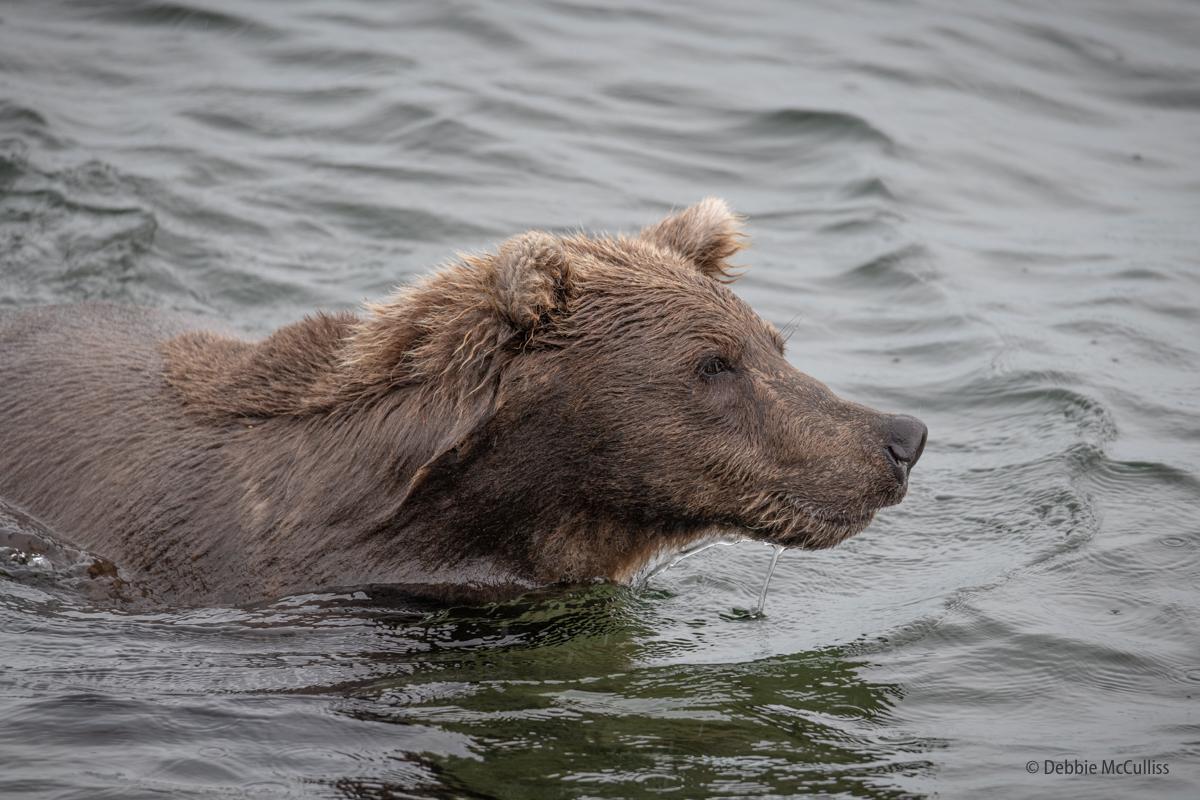 Alaska, Brooks Falls, photo