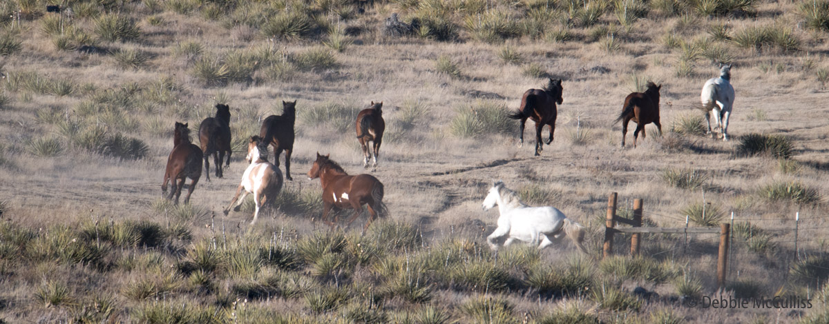 2017, Great Escape Mustang Sanctuary, December 9, winter, photo