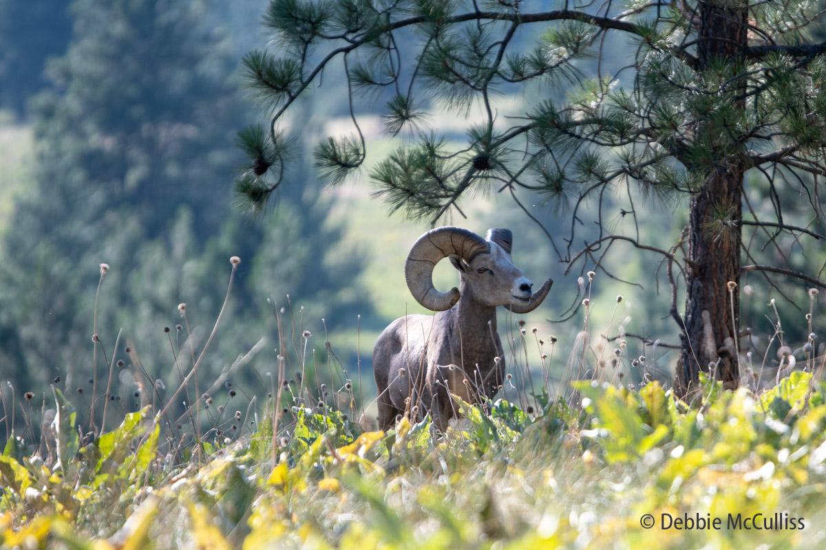 Wild Horse Island State Park, Montana, photo