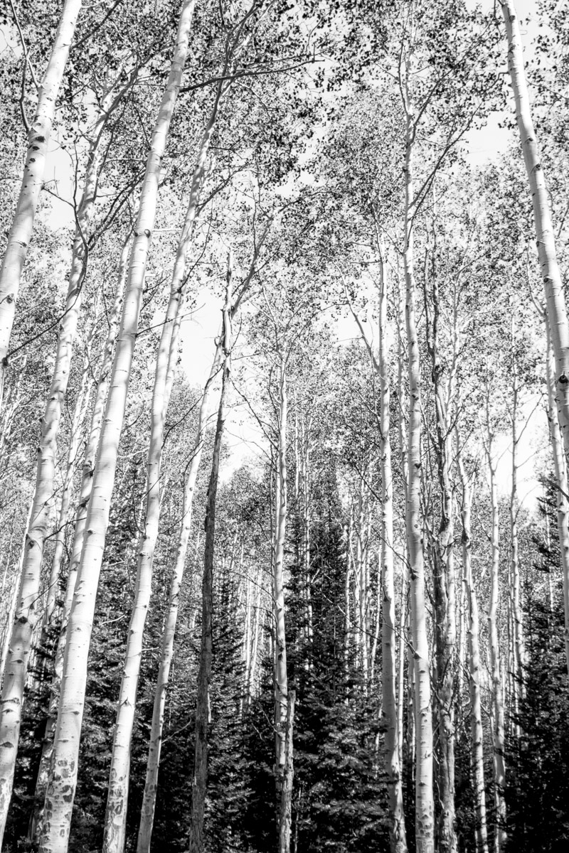 Steamboat Springs, Colorado, Black and White, photo