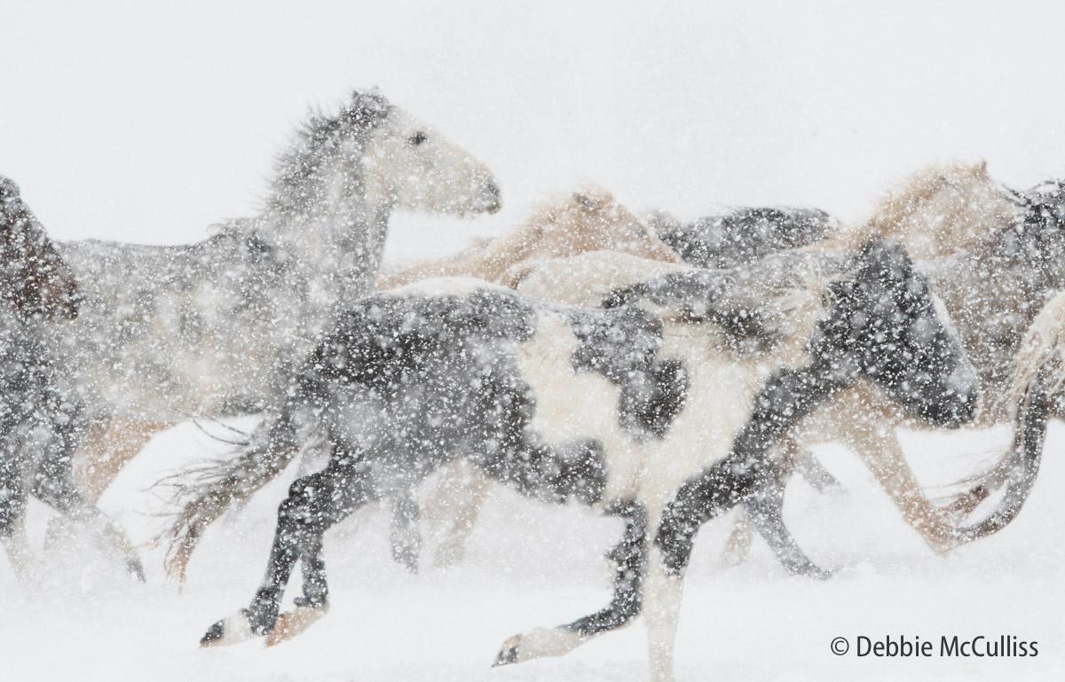 DDD Ranch, February 2018, Horses, Kalispell, Montana, photo