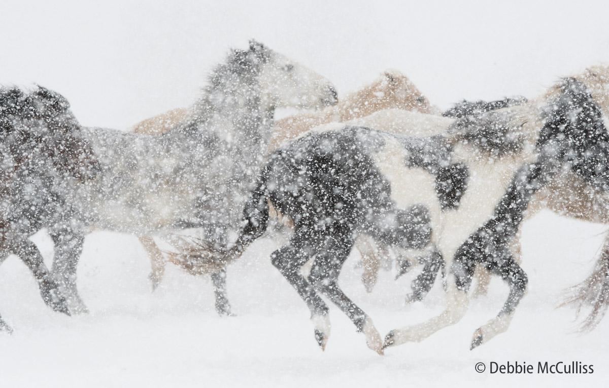 Triple DDD Ranch, February 2018, Horses, Kalispell, Montana Ranch, photo