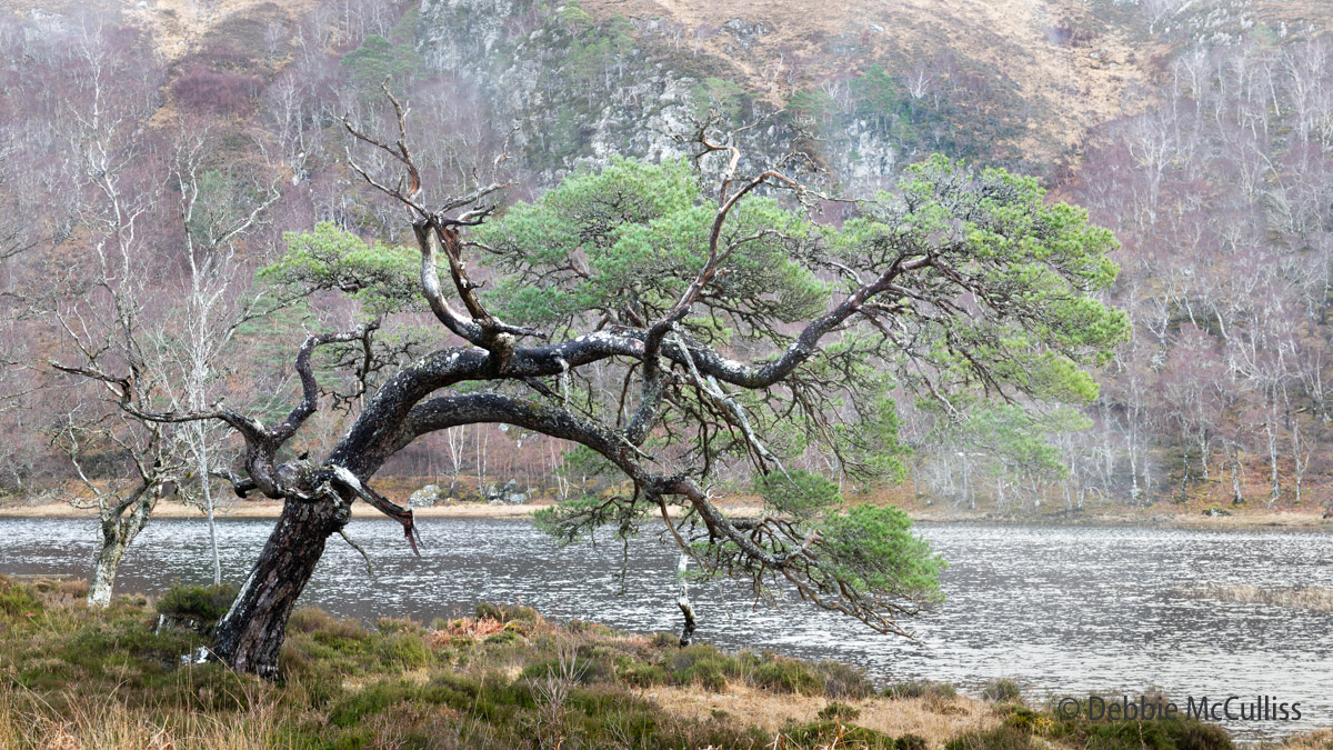 Wester Ross, photo