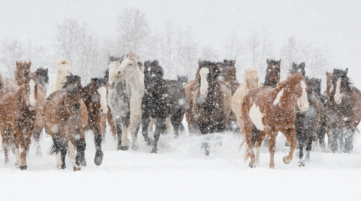 DDD Ranch, February 2018, Kalispell, Montana, horses, photo