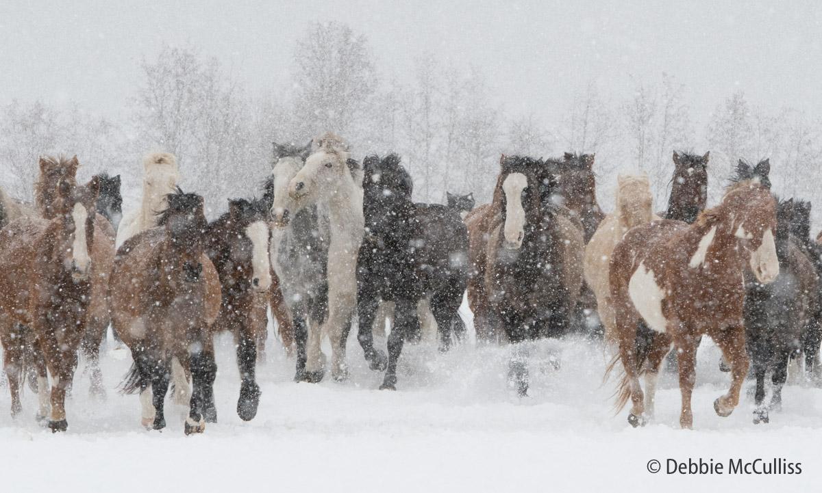 DDD Ranch, February 2018, Kalispell, Montana, horses, photo