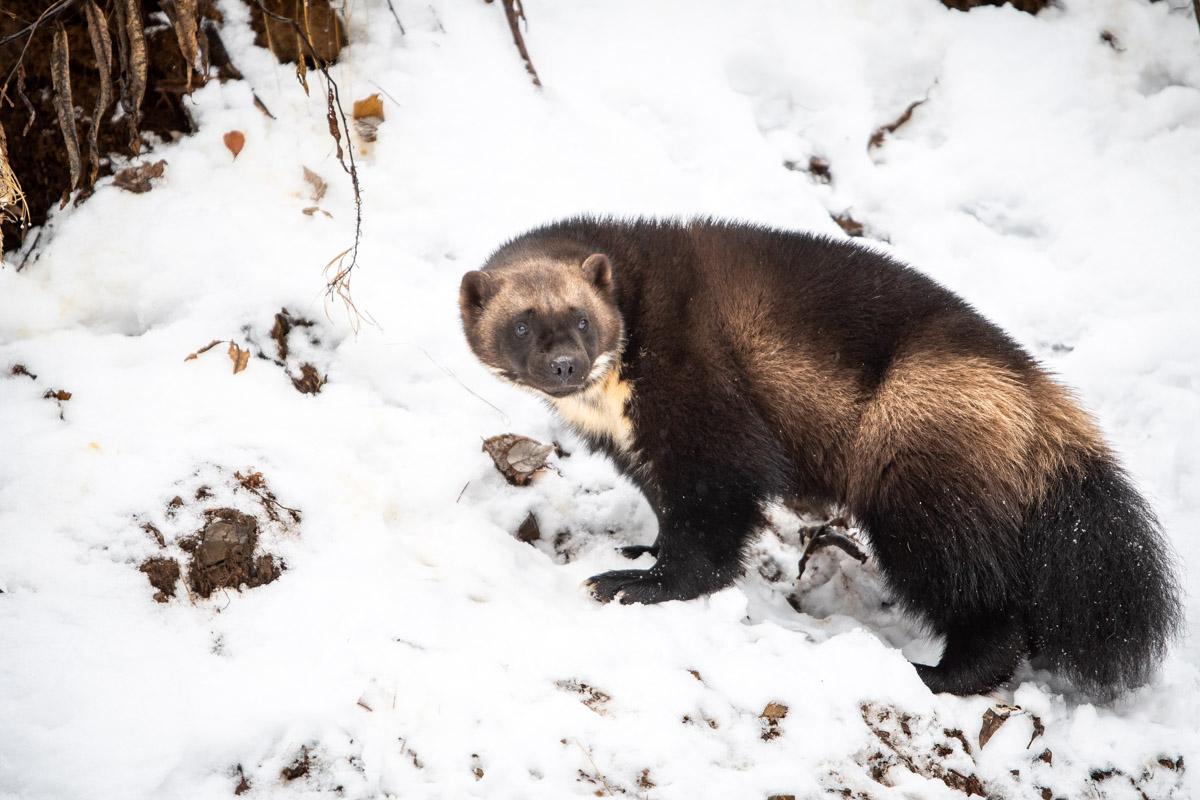 Alaska, Kroschel Wildlife Refuge, photo