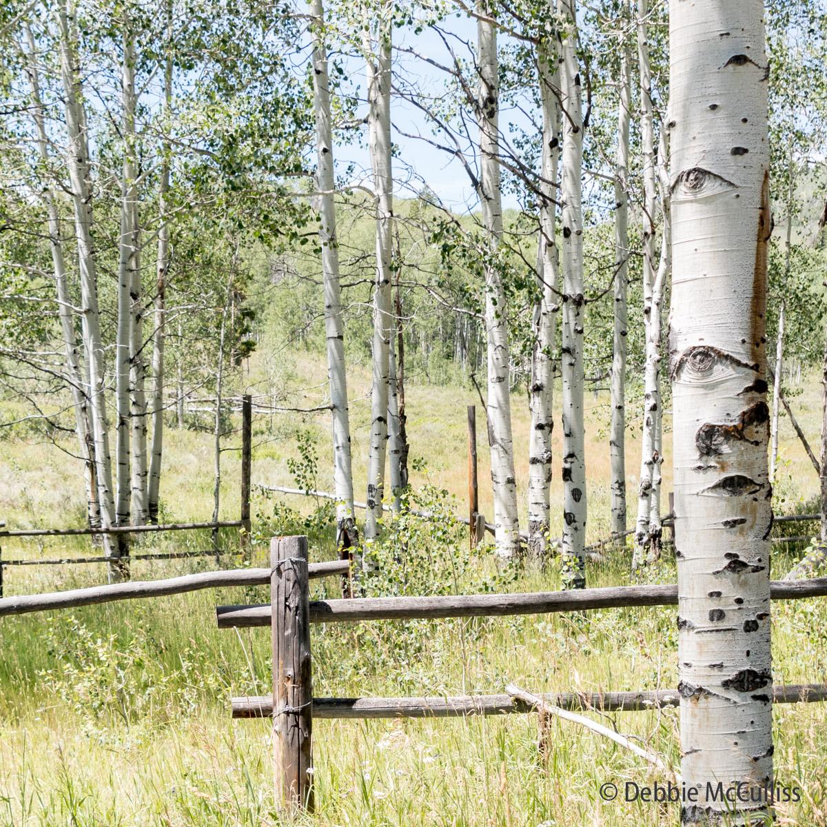 Woodchuck Mountain, Ranch, Stagecoach, Colorado, photo